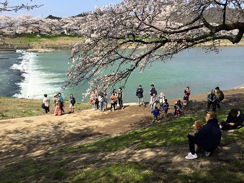 一目千本桜ププ.jpg